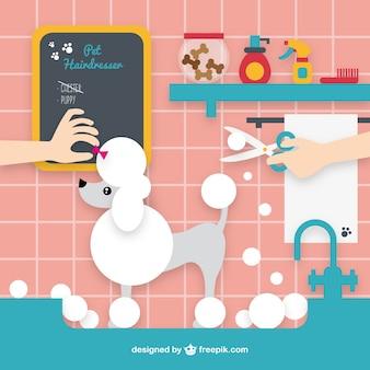 Peluquería para mascotas