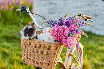 Pequeña adorable colorido europa solos