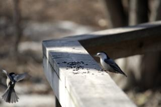 Pequeñas alas de aves