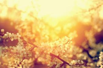 Pequeñas flores blancas iluminadas por el sol
