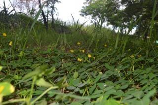 pequeñas plantas