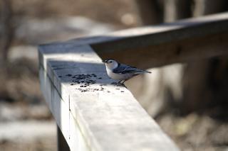 pequeño pájaro pequeño