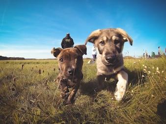 Pequeños cachorros en el campo