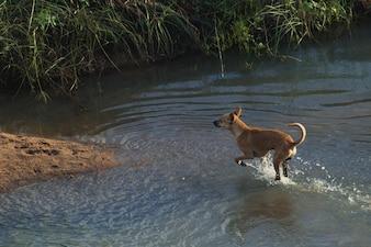 Perro, corriente, agua, seco, tierra