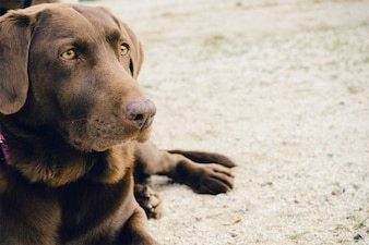 Perro de ojos verdes