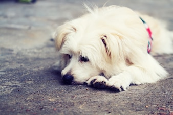 Perro solitario solo