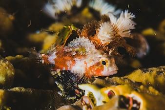 Pescados especiales en el mar tropical