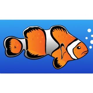 pez payaso vector