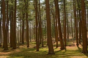 Área de picnic en el bosque