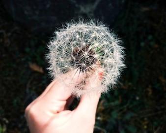 Pide un deseo
