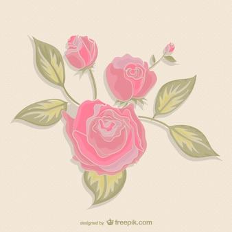 Rosas de color rosado