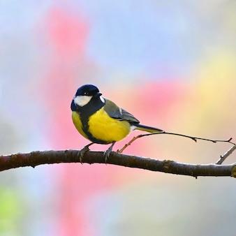 Pájaro tranquilo sobre una rama