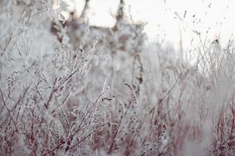 Planta congeladas con nieve por encima
