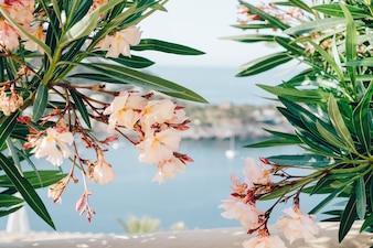 Planta floreciente con puerto borroso de fondo
