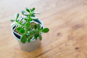 Planta pequeña en una maceta metálica