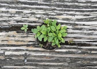 Planta verde en la madera