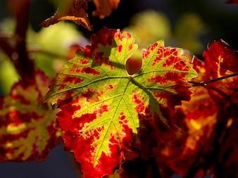 Planta viña vino paisaje diario de la naturaleza
