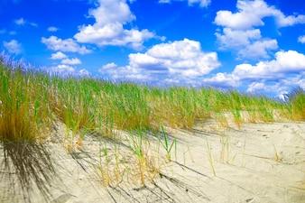 Plantas creciendo en la arena