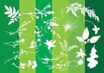 plantas de siluetas gráficas naturaleza