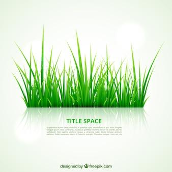 Plantilla de la hierba verde