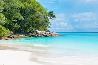 Playa de arena con mar tranquilo y vegetación