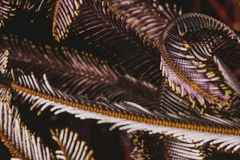 Pluma subacuática de color marrón