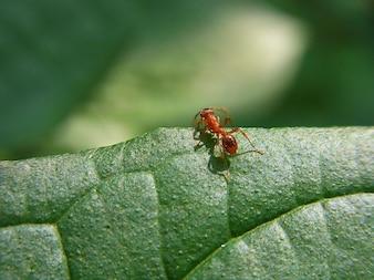 pradera bosque hormiga naturaleza animal de insectos