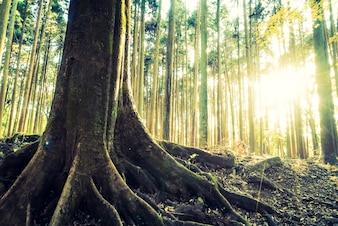 Primer plano de árbol con sus raíces