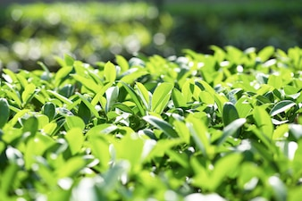 Primer plano de arbusto brillante