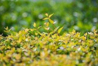 Primer plano de arbusto germinando