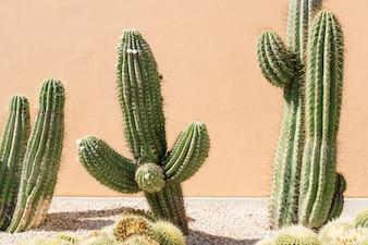 Primer plano de campo de cactus