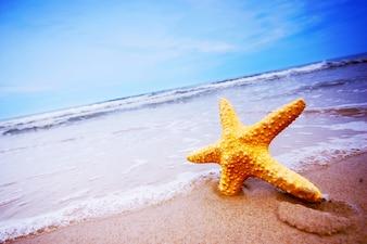 Primer plano de estrella de mar en la playa