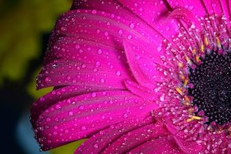Primer plano de flor con gotas de agua