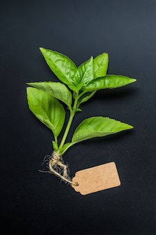 Primer plano de hierba aromática con una etiqueta en blanco