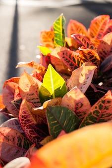 Primer plano de hojas decorativas en otoño