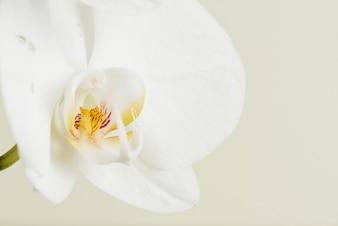 Primer plano de la flor de orquídea