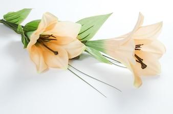 Primer plano de lirios florecientes