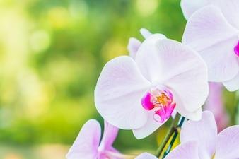 Primer plano de orquídea blanca