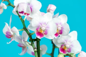Primer plano de orquídeas decorativas