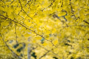 Primer plano de ramas con hojas amarillas