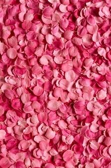 Pétalo de rosa de color rosa material de imagen de fondo