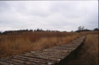 puente de madera, la naturaleza