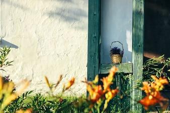 Puerta con flores delante