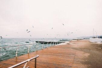 Puerto marítimo con gaviotas