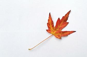 """""""Hoja roja del otoño"""""""