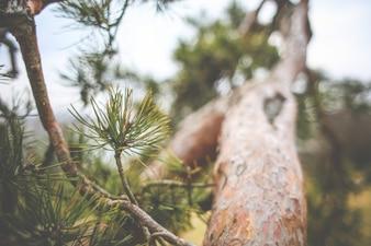 Rama de árbol de cerca