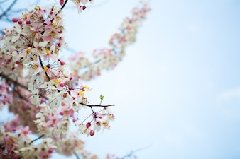 Rama de la hermosa flor rosa