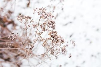 Rama de un árbol con nieve de fondo
