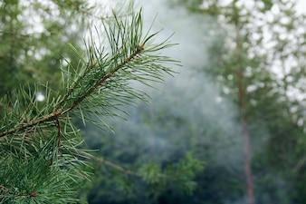 Rama de un árbol y el humo