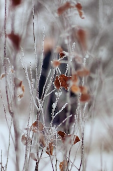 Ramas con hojas secas congeladas